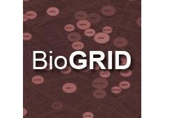 The BioGRID